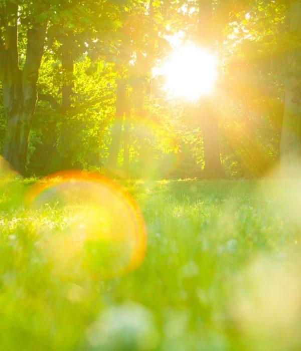 Créer son jardin soi-même et petit à petit : les pièges à éviter